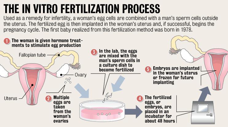 egg-and-sperm-fertilization-process-girl-friend-pics